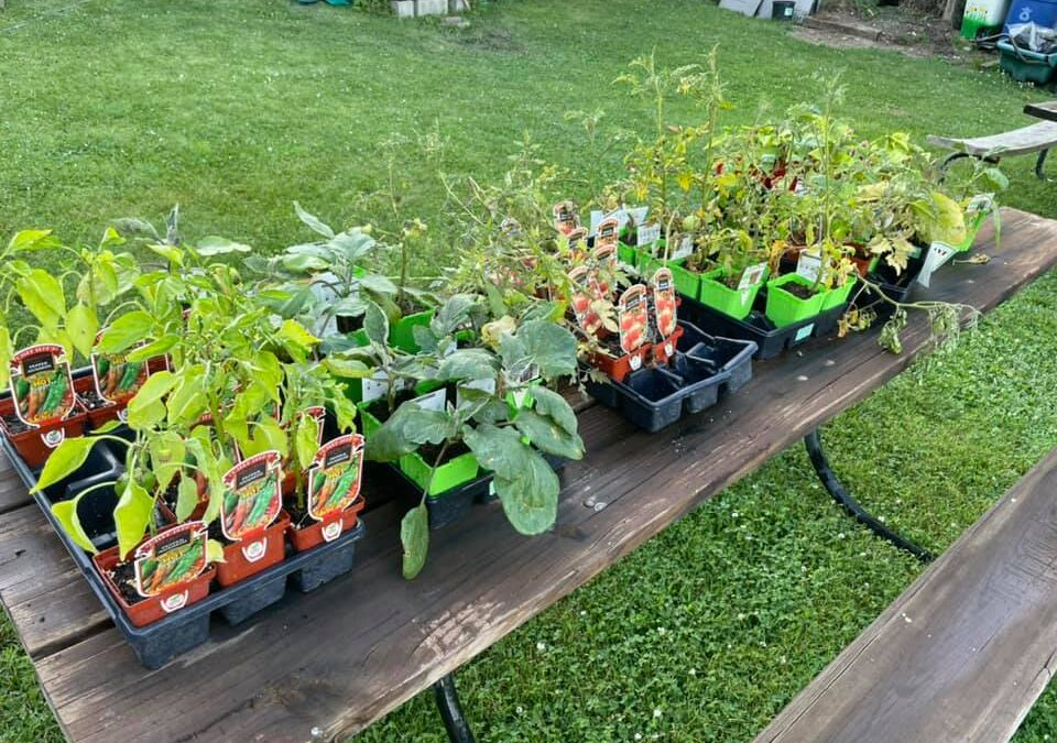 Free Vegetable Plant Donations from Trees, Shrubs & More